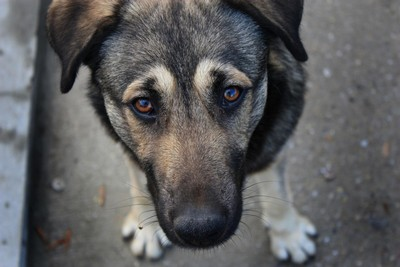 До какого время могут лаять собаки в частном секторе