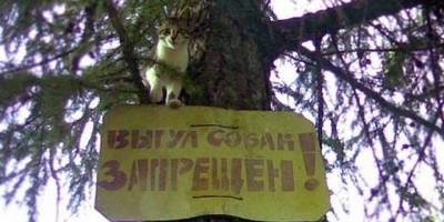 Закон о запрете выгула собак на детских площадках