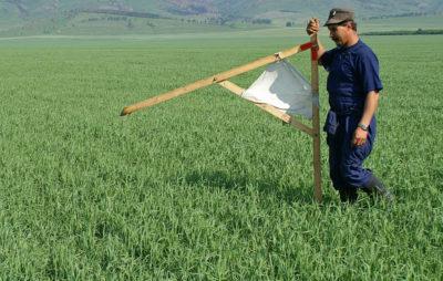 Изображение - Процедура оформления земли в аренду у государства под бизнес zemlya_v_arendu_3_02155352-400x254